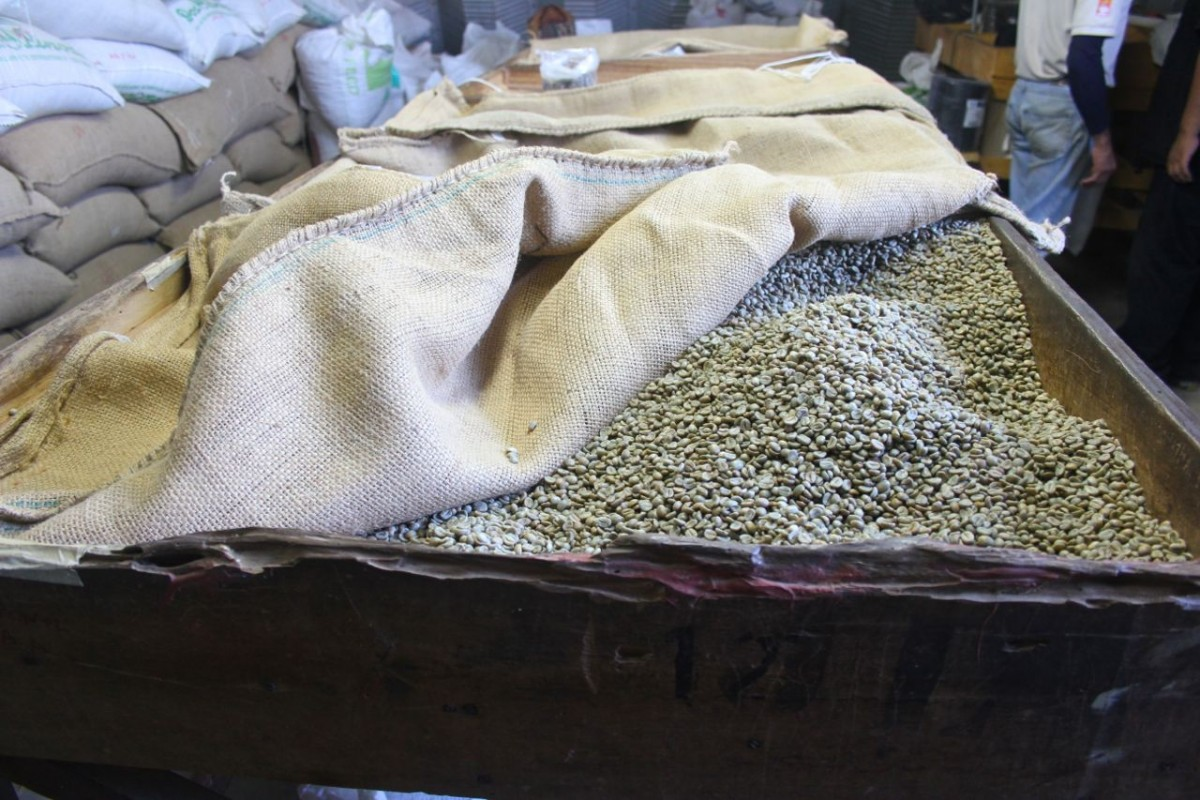 Beans ready for bagging |Republic of Freedom
